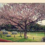 春がいちばん